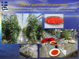 Friðheimar greenhouse cultivation centre where you can learn about the magic