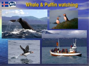 Whale & Puffin watching