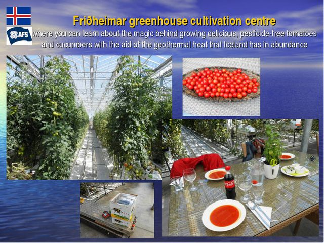 Friðheimar greenhouse cultivation centre where you can learn about the magic...