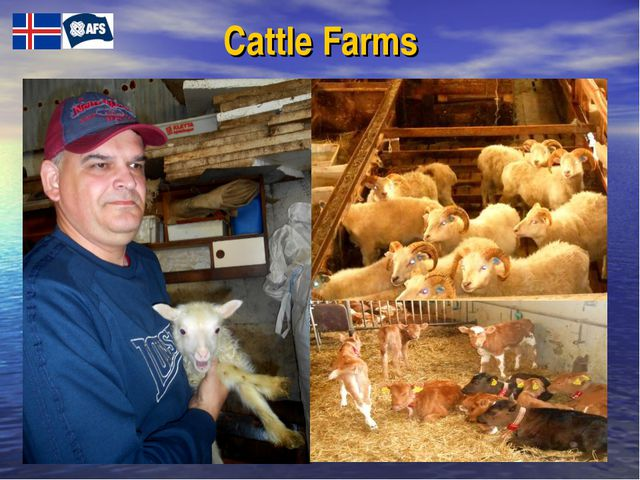 Cattle Farms