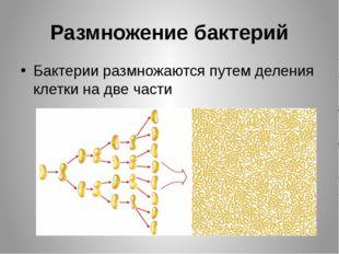 Размножение бактерий Бактерии размножаются путем деления клетки на две части
