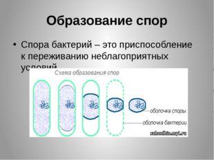 Образование спор Спора бактерий – это приспособление к переживанию неблагопри