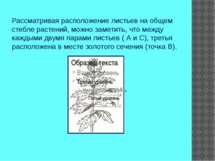 Рассматривая расположение листьев на общем стебле растений, можно заметить, ч