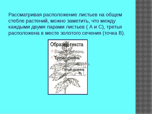 Рассматривая расположение листьев на общем стебле растений, можно заметить, ч...