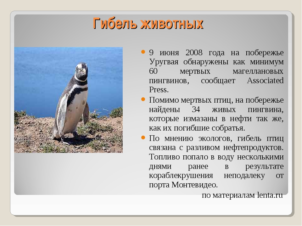 Гибель животных 9 июня 2008 года на побережье Уругвая обнаружены как минимум...