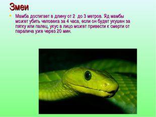 Змеи Мамба достигает в длину от 2 до 3 метров. Яд мамбы может убить человека