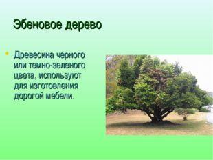 Эбеновое дерево Древесина черного или темно-зеленого цвета, используют для из