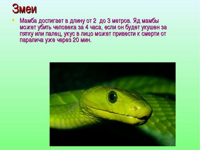 Змеи Мамба достигает в длину от 2 до 3 метров. Яд мамбы может убить человека...