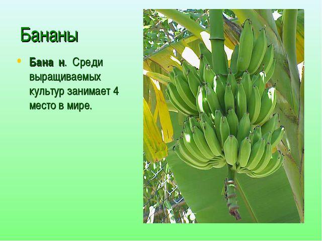 Бананы Бана́н. Среди выращиваемых культур занимает 4 место в мире.