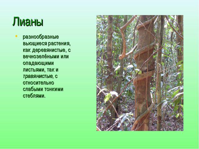 Лианы разнообразные вьющиеся растения, как деревянистые, с вечнозелёными или...