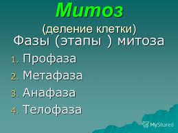 C:\Documents and Settings\Natalya\Рабочий стол\митозforum.jpg