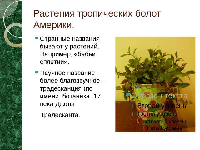 Растения тропических болот Америки. Странные названия бывают у растений. Напр...