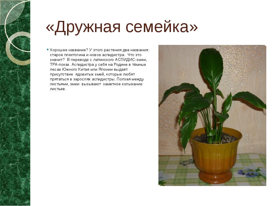 «Дружная семейка» Хорошее название? У этого растения два названия: старое пле...