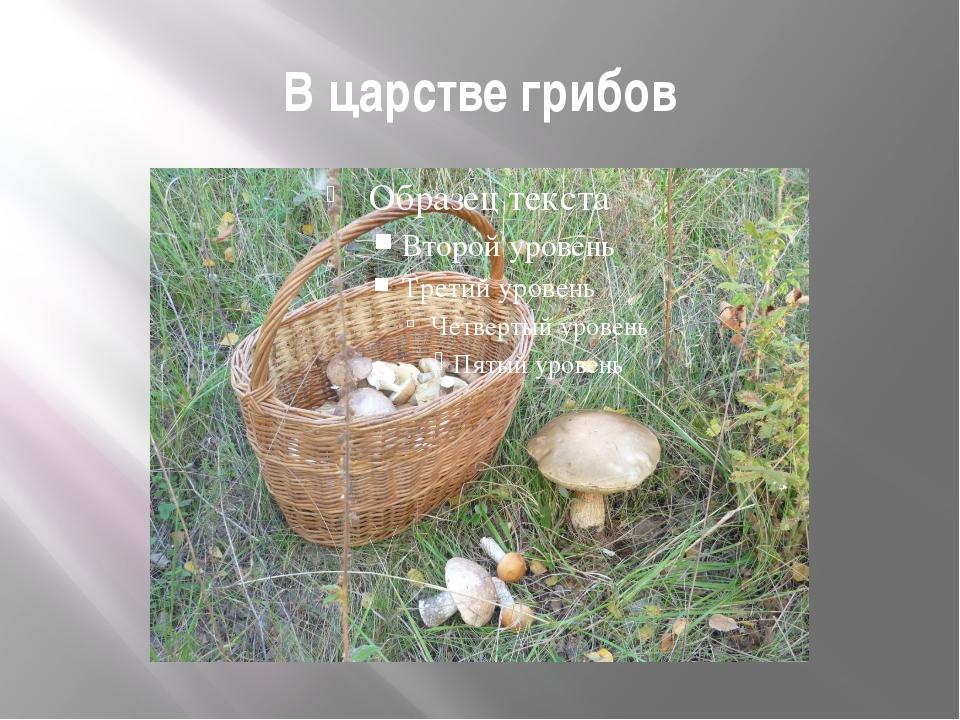В царстве грибов
