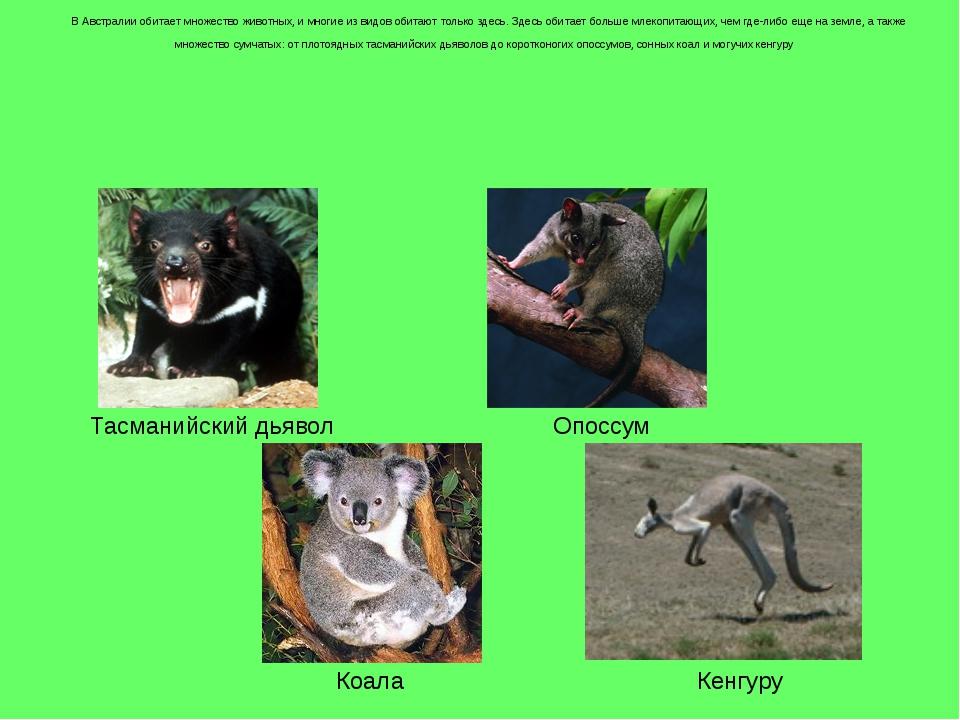 В Австралии обитает множество животных, и многие из видов обитают только зде...