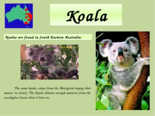 """Koala The name koala, comes from the Aboriginal saying that means """"no drink""""."""