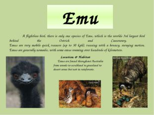 Emu A flightless bird, there is only one species of Emu, which is the worlds