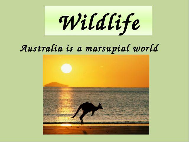 Wildlife Australia is a marsupial world