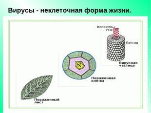 Вирусы - неклеточная форма жизни.
