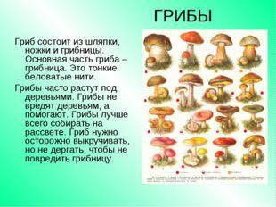 ГРИБЫ Гриб состоит из шляпки, ножки и грибницы. Основная часть гриба – грибни