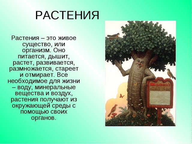 РАСТЕНИЯ Растения – это живое существо, или организм. Оно питается, дышит, ра...