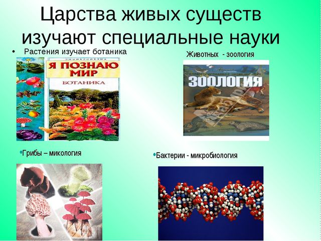 Царства живых существ изучают специальные науки Растения изучает ботаника Гри...