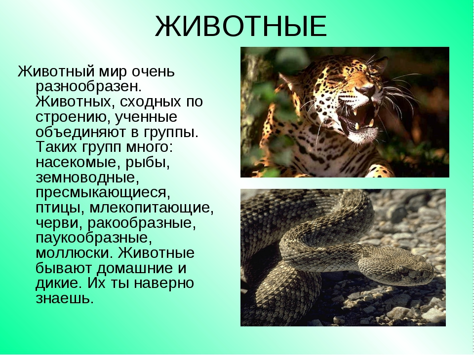 ЖИВОТНЫЕ Животный мир очень разнообразен. Животных, сходных по строению, учен...