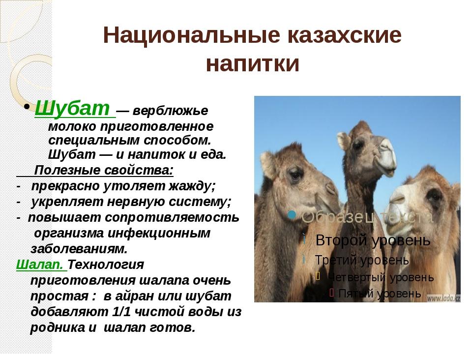 Национальные казахские напитки Шубат — верблюжье молоко приготовленное специа...