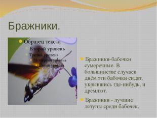 Бражники. Бражники-бабочки сумеречные. В большинстве случаев днём эти бабочки