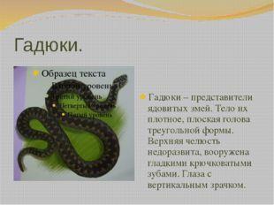 Гадюки. Гадюки – представители ядовитых змей. Тело их плотное, плоская голова