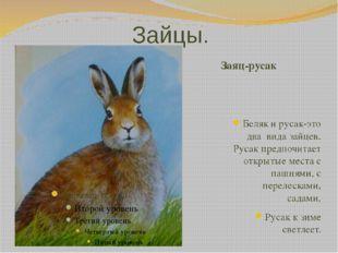 Зайцы. Заяц-русак Беляк и русак-это два вида зайцев. Русак предпочитает откры