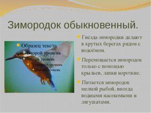 Зимородок обыкновенный. Гнёзда зимородки делают в крутых берегах рядом с водо