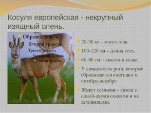 Косуля европейская - некрупный изящный олень. 20-30 кг – масса тела. 100-120