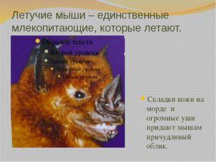 Летучие мыши – единственные млекопитающие, которые летают. Складки кожи на мо
