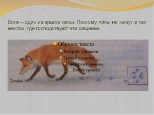 Волк – один из врагов лисы. Поэтому лисы не живут в тех местах, где господств