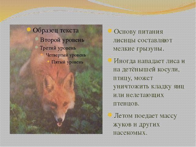 Основу питания лисицы составляют мелкие грызуны. Иногда нападает лиса и на де...