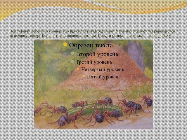 Под тёплым весенним солнышком просыпается муравейник. Маленькие работяги прин...