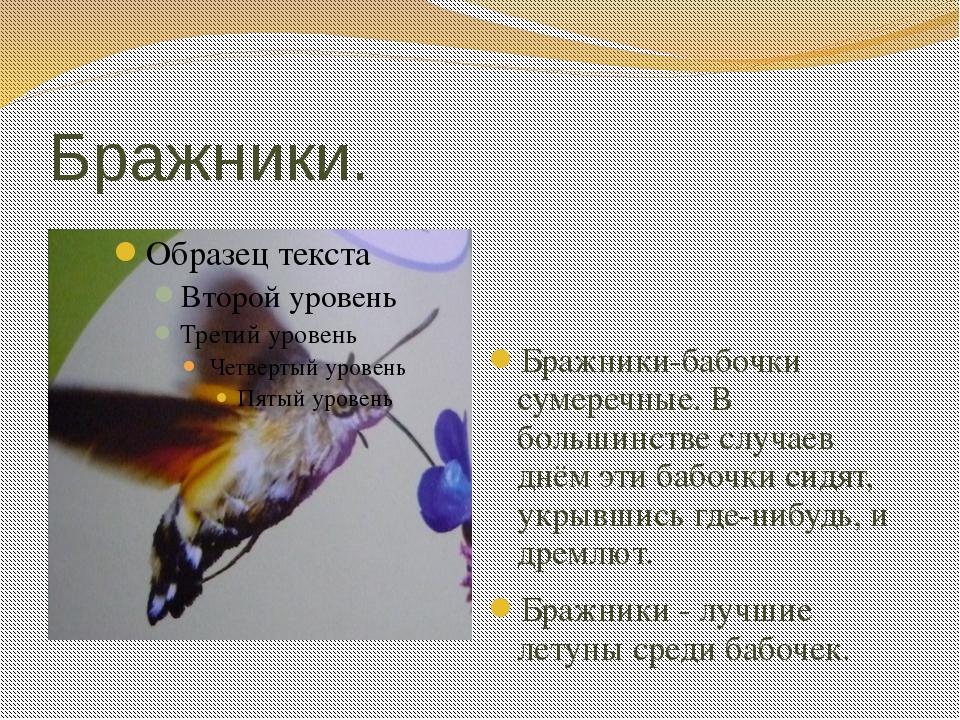 Бражники. Бражники-бабочки сумеречные. В большинстве случаев днём эти бабочки...