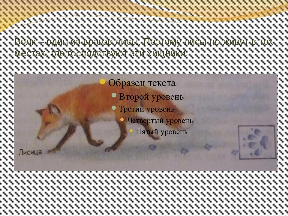 Волк – один из врагов лисы. Поэтому лисы не живут в тех местах, где господств...