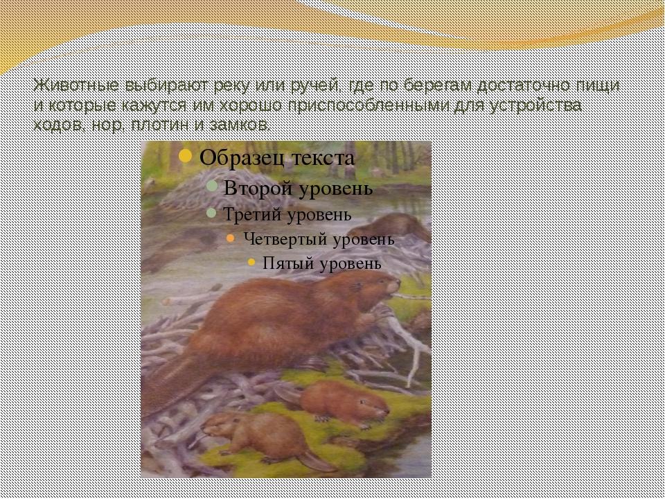 Животные выбирают реку или ручей, где по берегам достаточно пищи и которые ка...