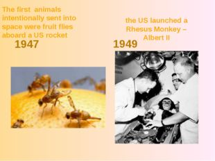 the US launched a Rhesus Monkey – Albert II 1947 1949 The first animals inten