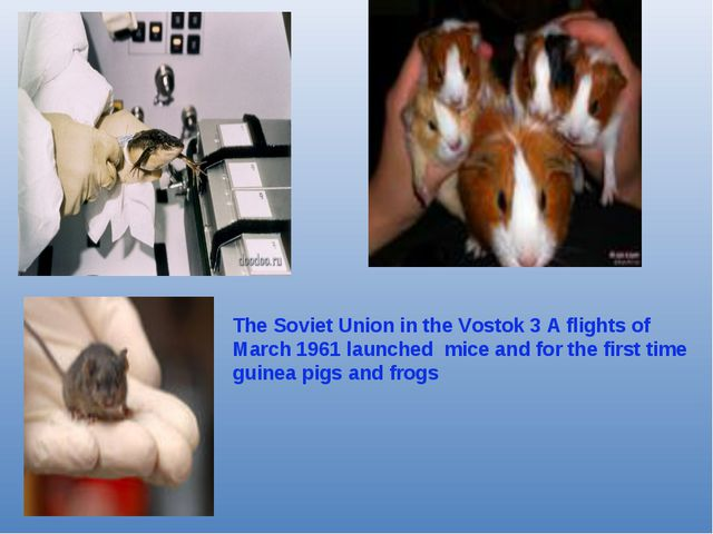 The Soviet Union in the Vostok 3 A flights of March 1961 launched mice and fo...
