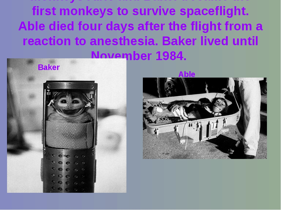 Monkeys Able and Baker became the first monkeys to survive spaceflight. Able...