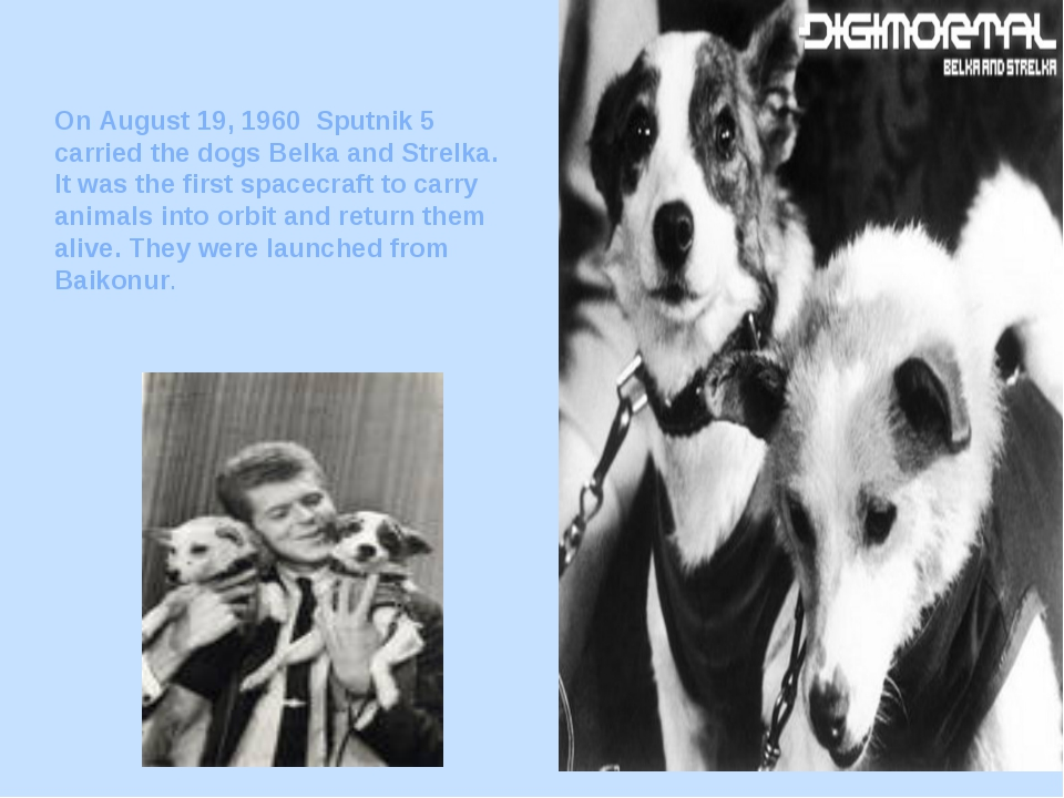 On August 19, 1960 Sputnik 5 carried the dogs Belka and Strelka. It was the f...