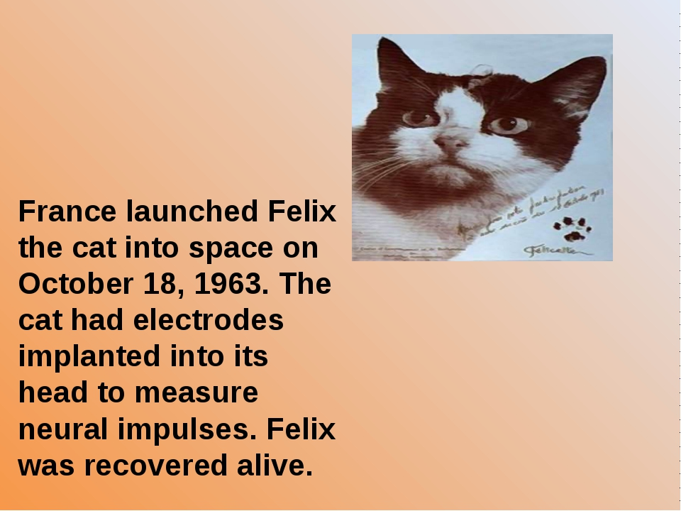 France launched Felix the cat into space on October 18, 1963. The cat had ele...