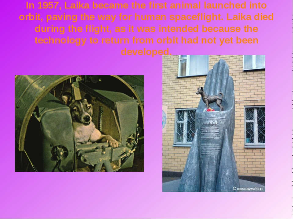 In 1957, Laika became the first animal launched into orbit, paving the way fo...