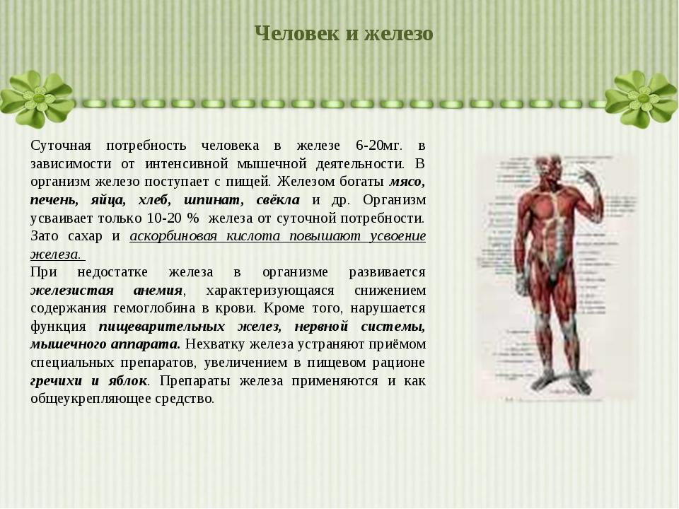 Человек и железо Суточная потребность человека в железе 6-20мг. в зависимости...