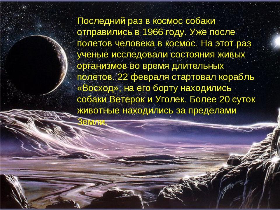 Последний раз в космос собаки отправились в 1966 году. Уже после полетов чело...