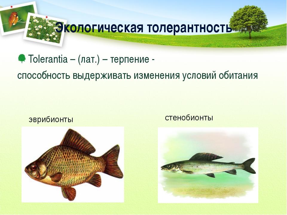 Экологическая толерантность Tolerantia – (лат.) – терпение - способность выде...
