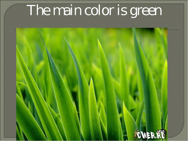 The main color is green